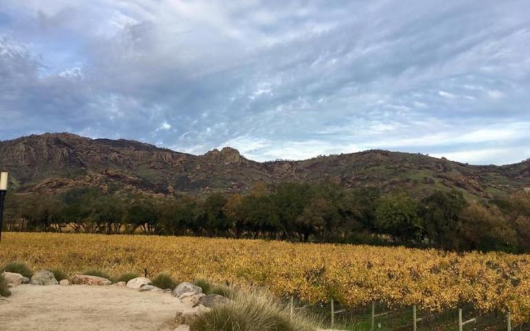Wine Journeys